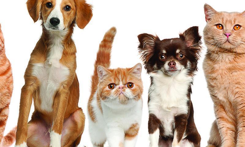 Ветеринарная вызывная служба Полный спектр лечения и ветеринарных услуг