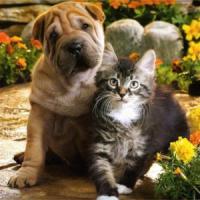Ветеринарная помощь на дому Предлагаю полный спектр лечения и ветеринарных услуг Вашим питомцам