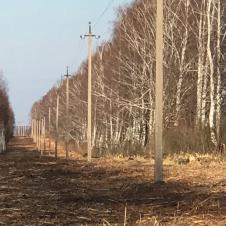 Аренда мульчера и рубильной машины по области на itebe.ru [2]